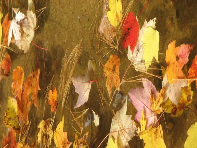 Leaves on Glen Lake